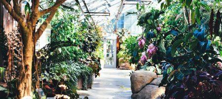 astuces grand mere jardin